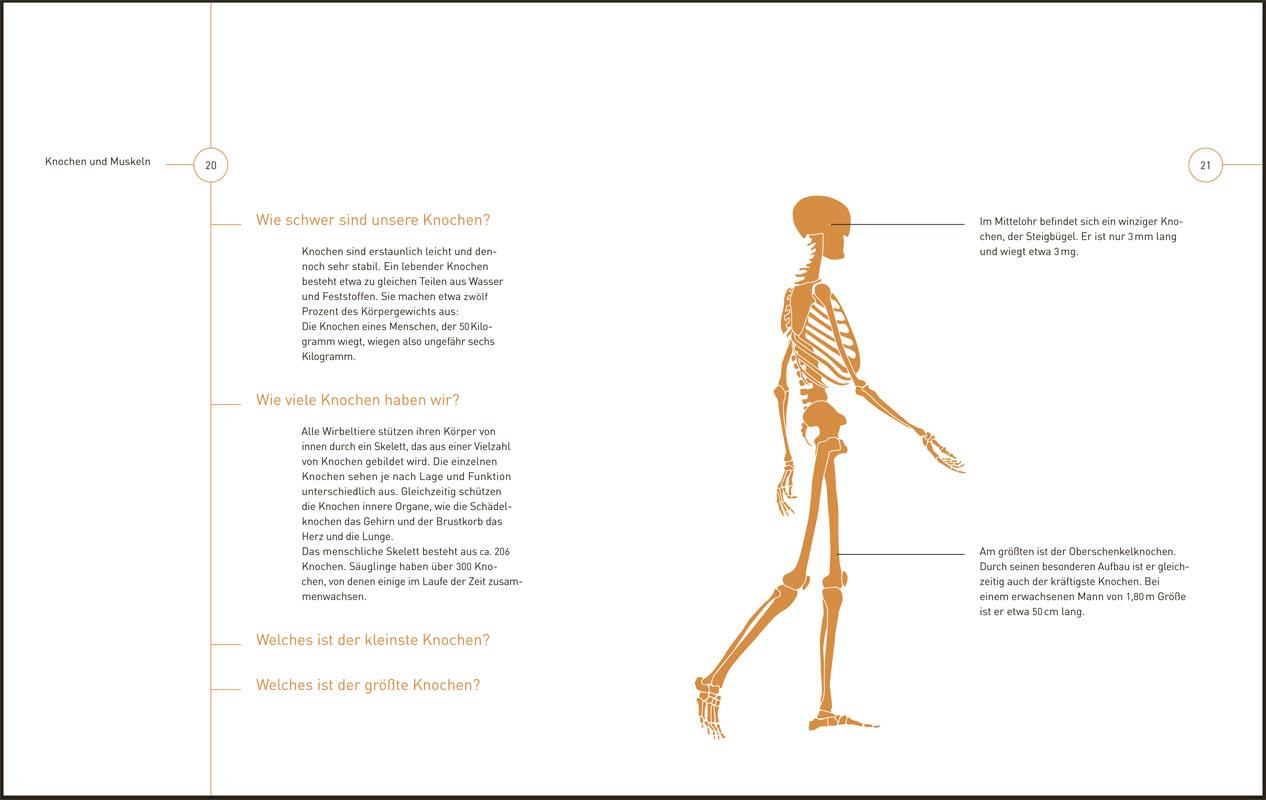 Großartig Lage Der Lunge Im Menschlichen Körper Fotos - Menschliche ...